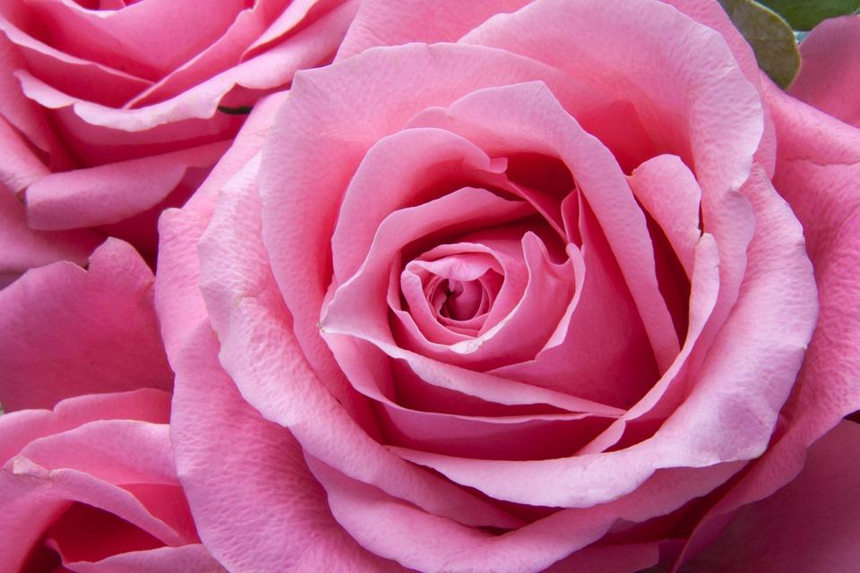Le pouvoir guérisseur du Rayon rose de l'Amour Divin.